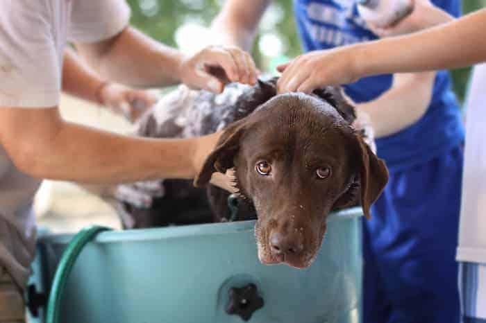 Best Smelling Dog Shampoo Reviews